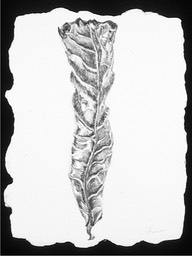 ©2003 Jan Aronson Aguilla Leaf #3 Graphite 8.5x6.5