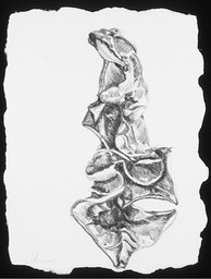 ©2003 Jan Aronson Aguilla Leaf #5 Graphite 8.5x6.5_1