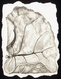 ©2003 Jan Aronson Aguilla Leaf #7 Graphite 8.5x6.5