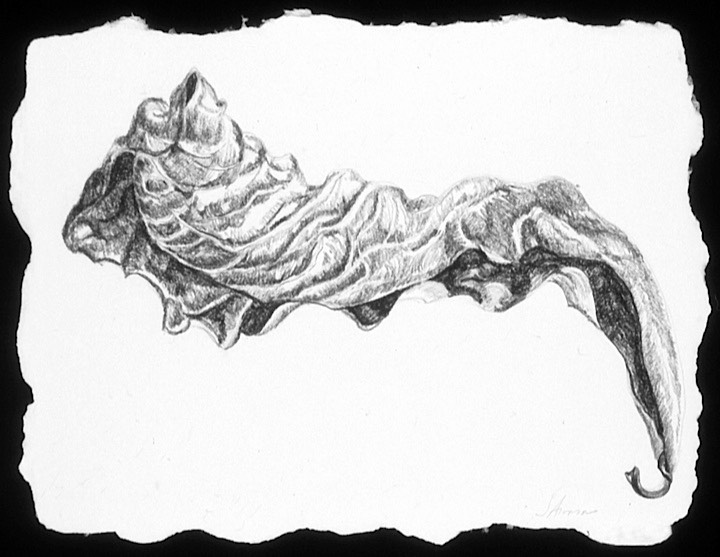 ©2003 Jan Aronson Aguilla Leaf #4 Graphite 6.5x8.5