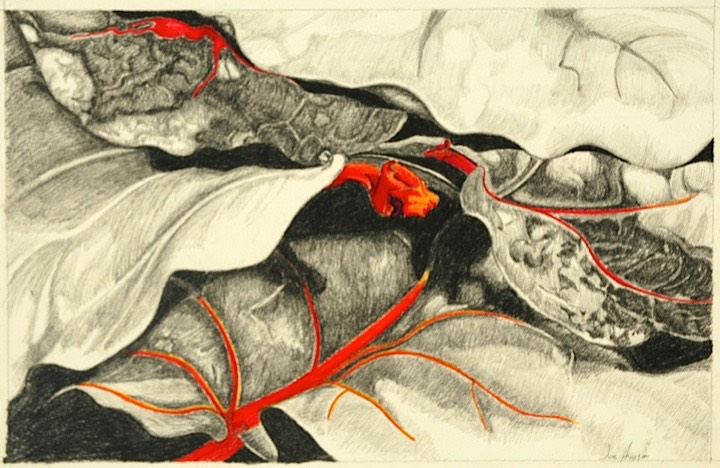 ©2005 Jan Aronson Small Leaves #7 Graphite & Colored Pencil on Paper 9x14 SOLD