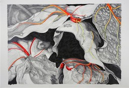 ©2006 Jan Aronson Leaves, Large Drawing #7 Graphite & Oil Pastel on Paper 27x38
